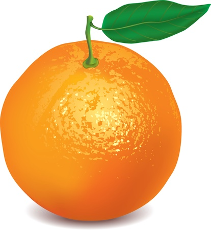 range fruit: orange isolated on white photo-realistic vector illustration