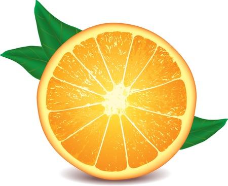 range fruit: orange isolated on white photo-realistic vector illustration