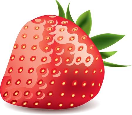 agrio: fresa aislado en blanco ilustraci�n vectorial foto-realista Vectores