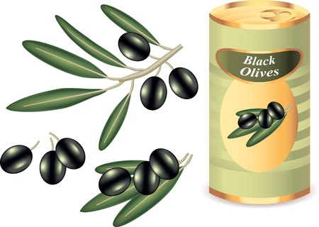 black olives, black olive branch and bank of black olives isolated   on white photo-realistic vector illustration Stock Vector - 13001664