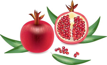 pomegranates: garnet and garnet grains isolated on white photo-realistic vector   illustration