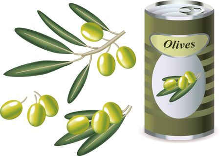 bank branch: green olives, olive branch and bank of olives isolated on white   photo-realistic vector illustration