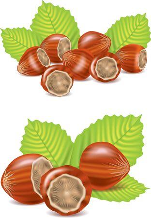 hazelnut: hazelnut isolated on white photo-realistic illustration Stock Photo