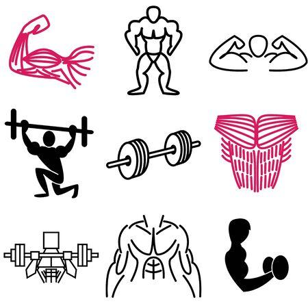 bicep: iconos m�sculo conjunto de vectores