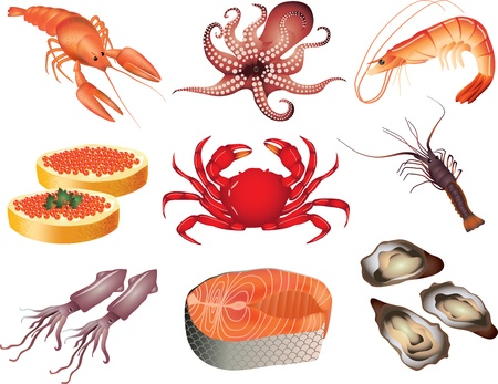 calamar: mariscos foto-realista juego de Ilustraci�n Vectores