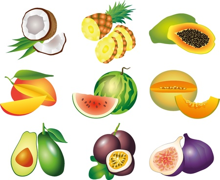 mangoes: exotic fruits picture-realistic illustration set