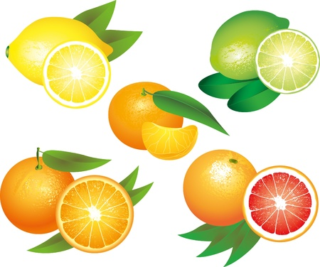 citrus fruits picture-realistic illustration set