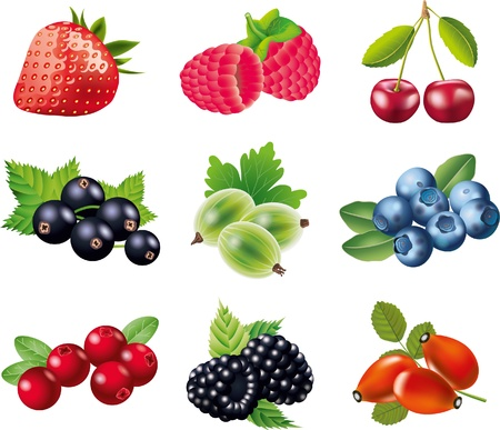 cranberry illustration: berries picture-realistic illustration set