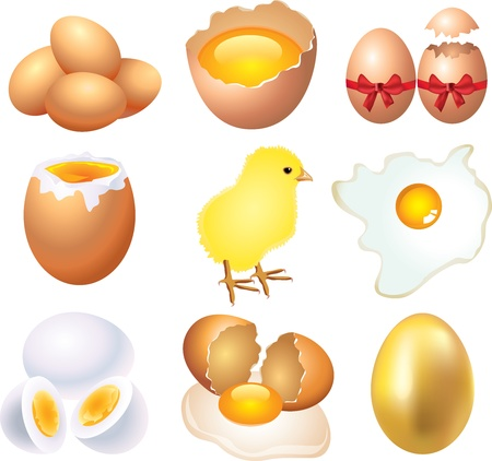 boiled eggs: eggs picture-realistic illustration set Illustration