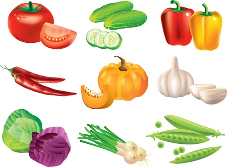 green cabbage: vegetables picture-realistic illustration set Illustration