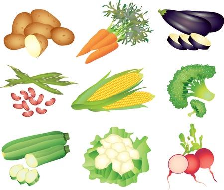 콜리 플라워: 야채 그림 사실적인 그림 세트