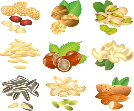 pine nuts: nuts and seeds picture-realistic illustration set