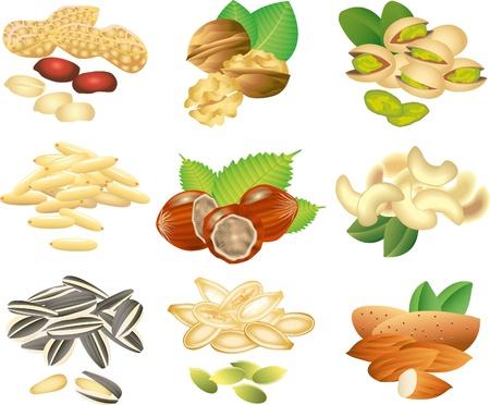 orzechów: orzechy i nasiona picture-realistyczny zestaw ilustracji