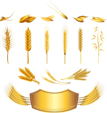 rye: wheat picture-realistic illustration set