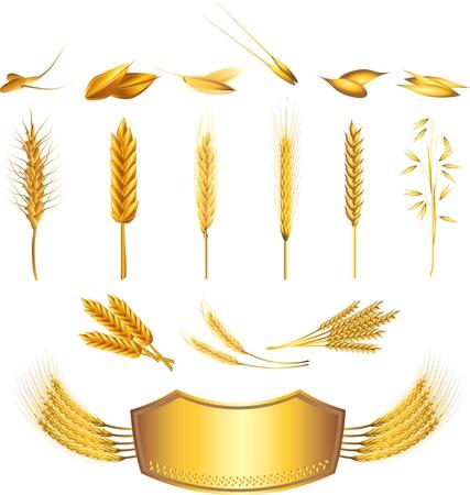 bran: wheat picture-realistic illustration set