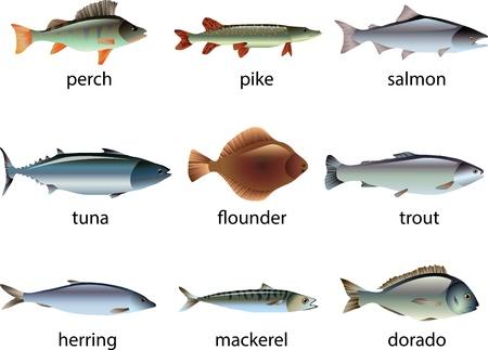 poisson photo-réaliste illustration ensemble