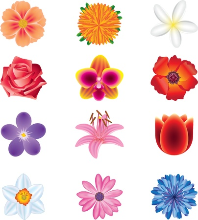 aster flowers: colorful flowers photo-realistic vector set