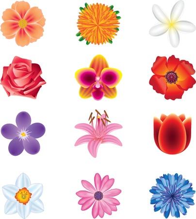 margriet: kleurrijke bloemen fotorealistische vector set Stock Illustratie