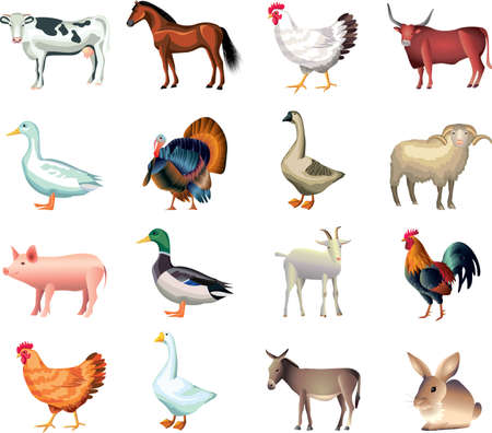 animals horned: farm animals photo-realistic vector set Illustration