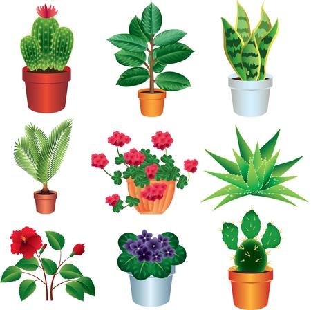 家の植物の写実的なベクトルのセット
