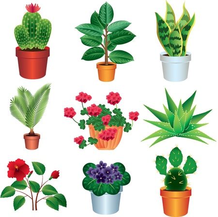 shrubs: home plants photo-realistic vector set Illustration