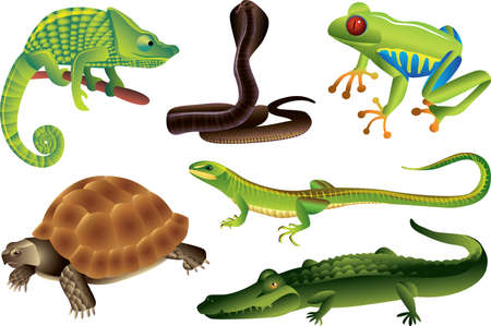 reptiles and amphibians photo-realistic vector set Vector