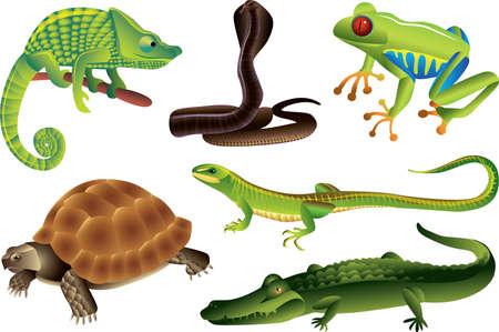 chameleon lizard: rettili e anfibi foto-realistica insieme di vettore
