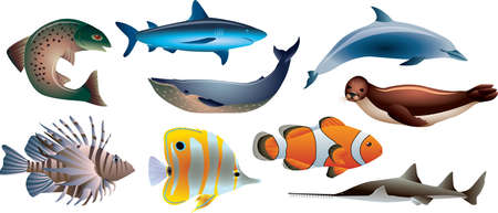 fishes and marine life photo-realistic vector set Stock Vector - 20364501