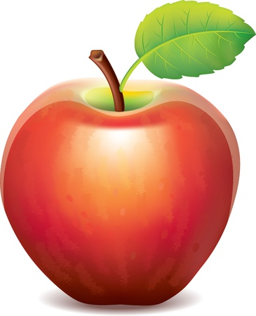 red apple isolated on white photo-realistic vector
