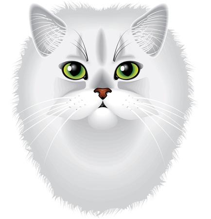 persian cat portrait detailed vector Vector