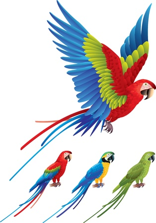 Macaw parrot spread wings and tree colorful sitting Aras photo realistic Illustration