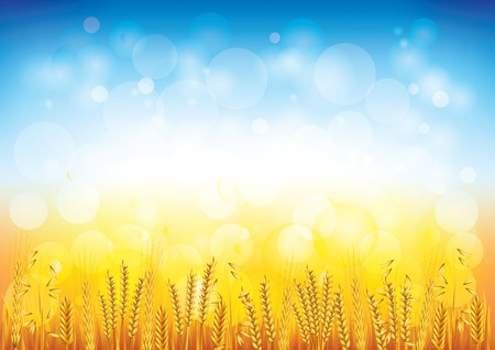 corn fields: Wheat field beautiful horizontal background vector illustration Illustration