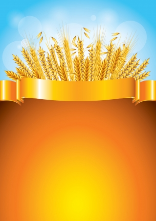 corn fields: Wheat and golden ribbon for text background vector illustration