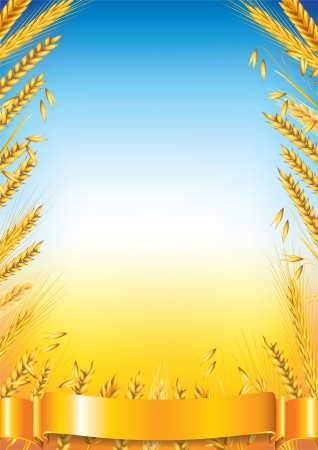 grain fields: Wheat frame on field background vector illustration