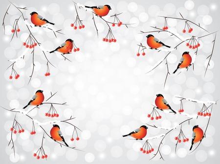 bullfinch: Bullfinch birds on rowan branches Illustration
