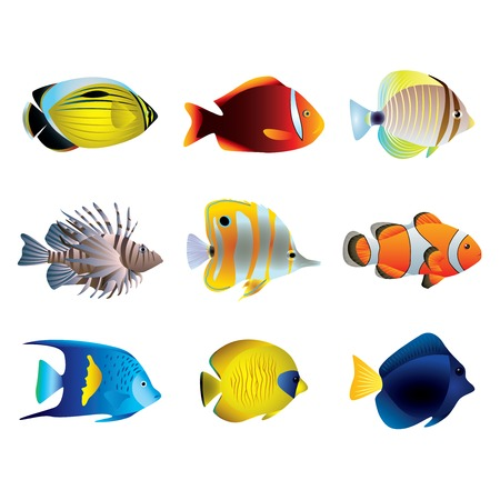 Popular tropical fishes on white vector set Иллюстрация