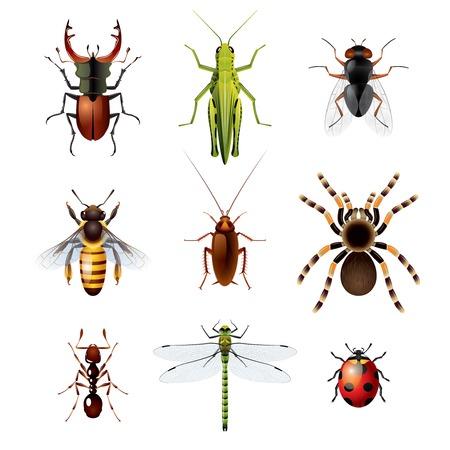 9 つのカラフルな昆虫の写実的なベクトル イラスト