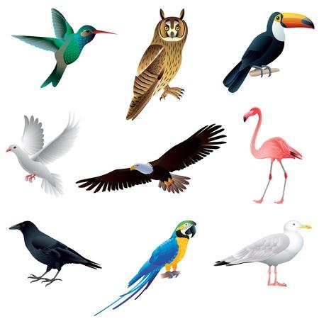 カラフルなベクトルの白いコレクション上で分離されて人気のある鳥