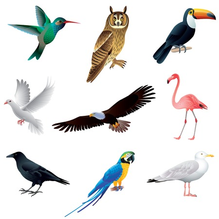 parrot tail: Popular birds isolated on white colorful vector collection Illustration