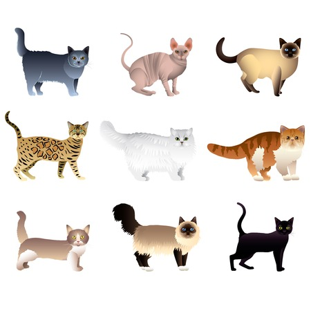 Popular purebred cats isolated on white colorful vector collection