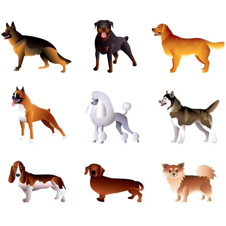 Popular purebred dogs isolated on white colorful vector collection Vector