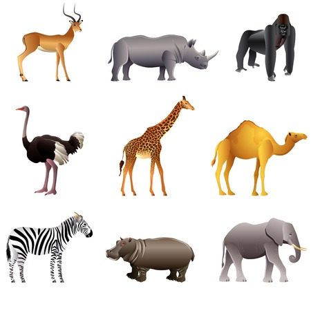 cebra: Animales populares africanos alta colección de vectores detallada