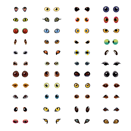 birds eye: Big collection of different animal eyes in vector