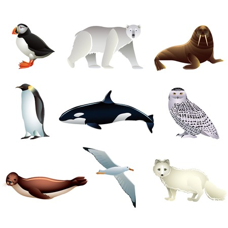 antarctica: Popular Arctic animals high detailed vector collection Illustration