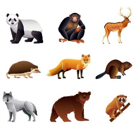 Popular Asian animals high detailed vector collection Vector