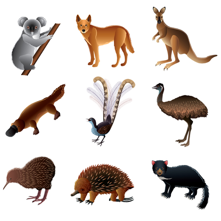Popular Australian animals high detailed vector collection