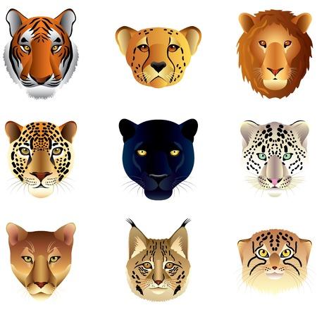 lince: Grandes felinos populares cabezas alta vector colecci�n detallada Vectores