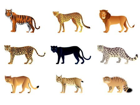 snow leopard: Popular big cats high detailed vector collection