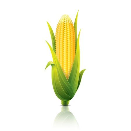 Maiskolben auf weißem Foto-realistische Vektor-Illustration isoliert