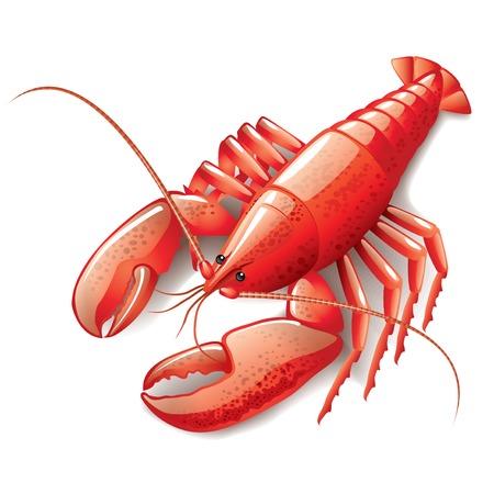 ciep�o: Gotowane homara wyizolowanych na białym fotorealistycznych ilustracji wektorowych Ilustracja